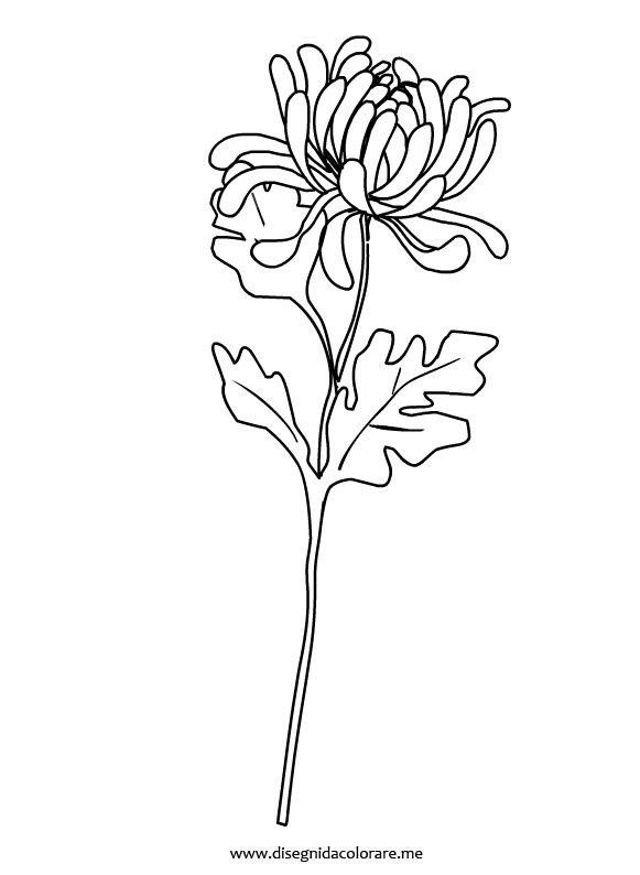 fiore-crisantemo