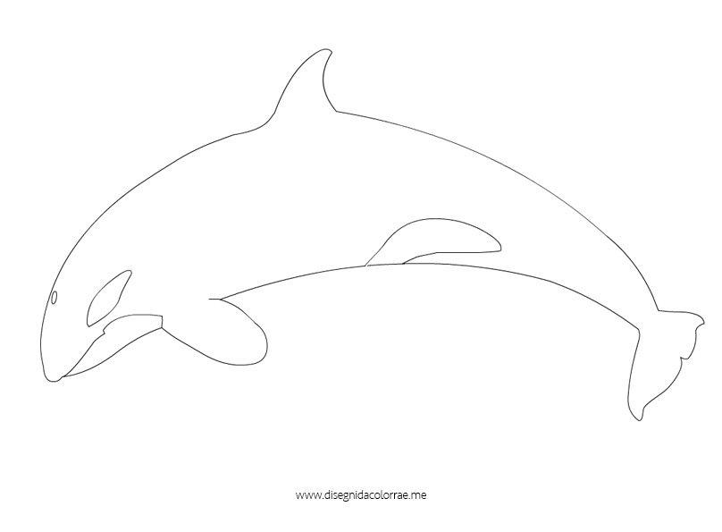 disegno-orca