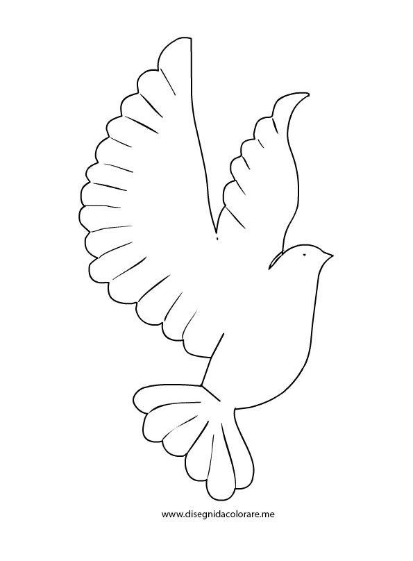 colomba-volo