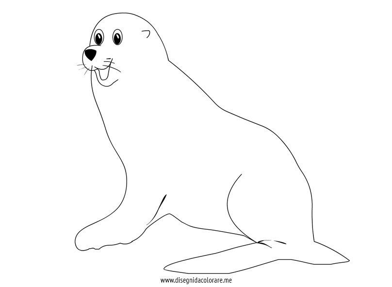 foca-disegno