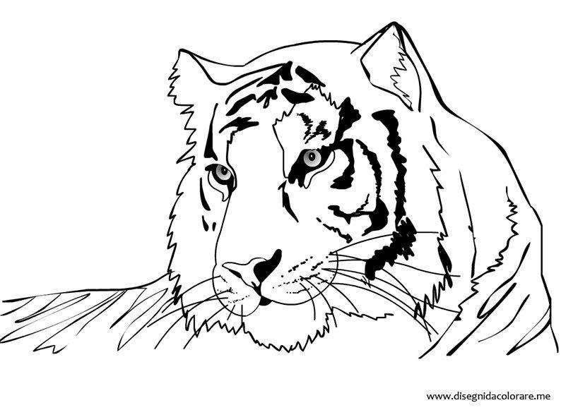 Disegno tigre disegni da colorare for Immagini di animali marini da stampare