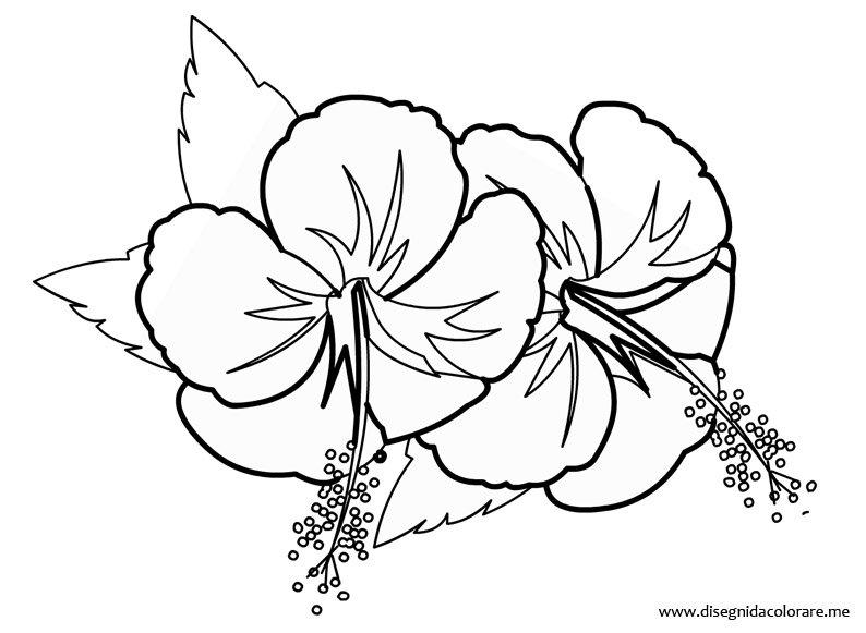 Disegno fiore hawaiano da colorare e stampare for Immagini di fiori facili da disegnare